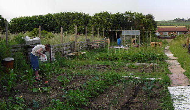 Our old allotment