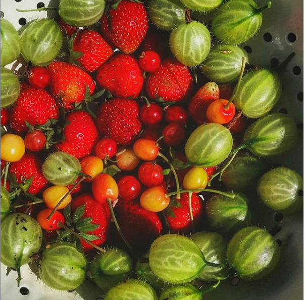 Gooseberries, strawberries and cherries