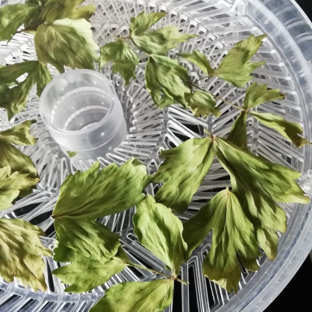 Drying lovage leaves